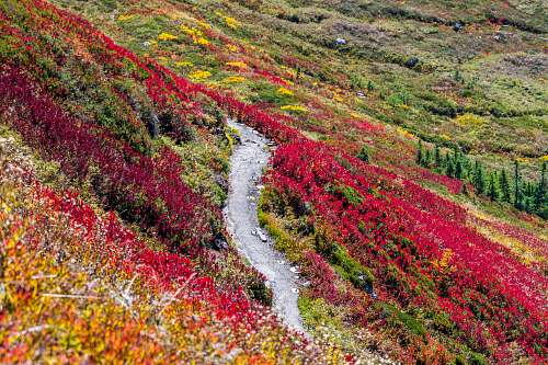 nature road in middle of red and yellow flower field trail