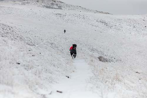 hiking black dog running on open field covered with snow at winter dof