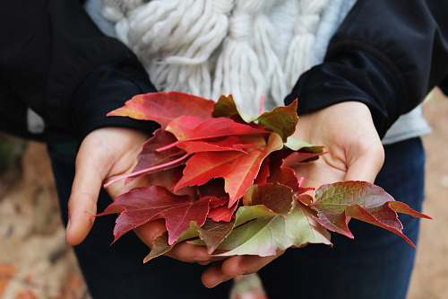 fall person holding red and green leaves autumn