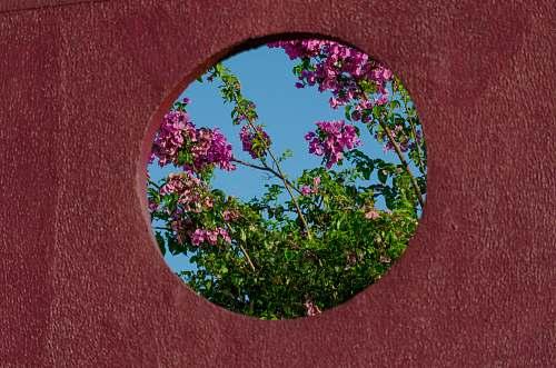 plant pink petaled flower bush