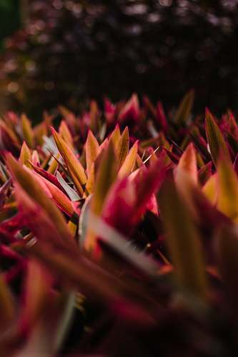 person closeup photography of pink-and-brown leafed plants people