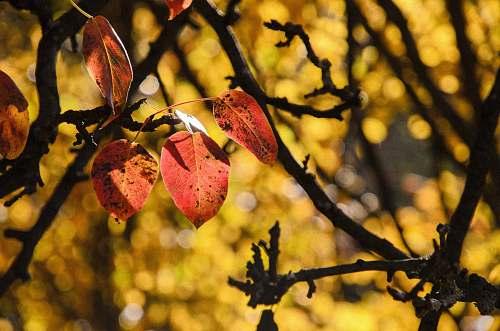 person macro shot of brown tree leaves leaves