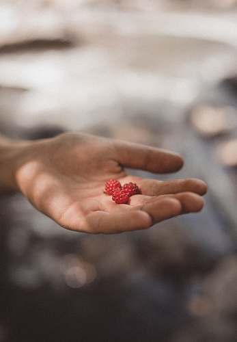 person person holding three red fruits in focus photography people