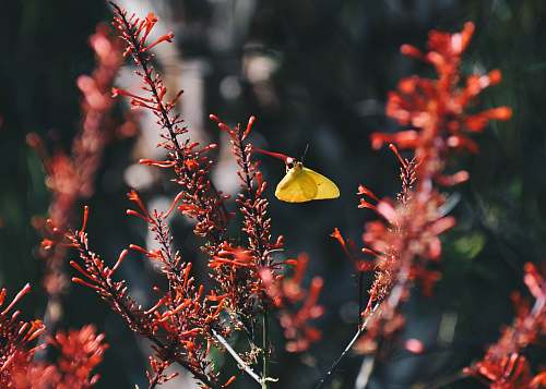 people selective focus photography of yellow butterfly perched on red flower bud person