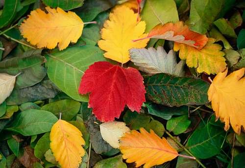 person yellow, red, and green fallen leaves people