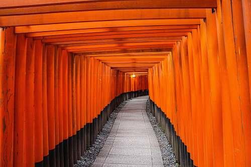 gate pathway between brown wooden trellis torii