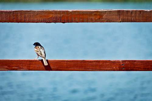 blue brown bird perched on red wooden railing bird