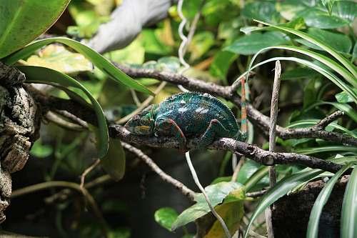 animal green animal on tree lizard