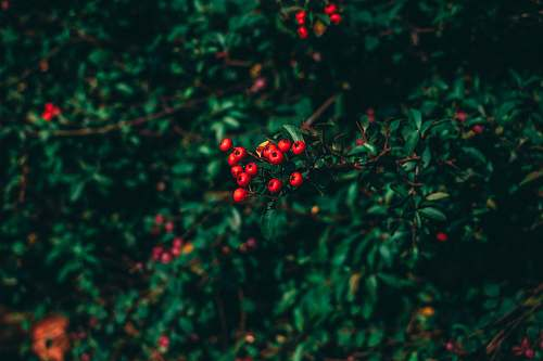 berlin selective focus photography of red berry plant germany