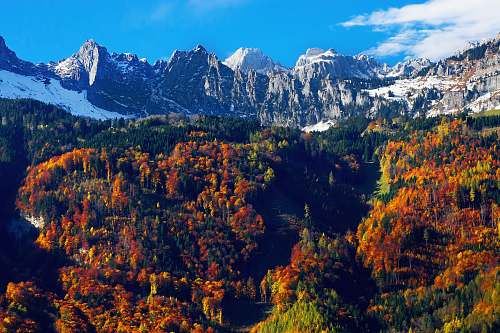 plant brown leafed trees in mountain nature