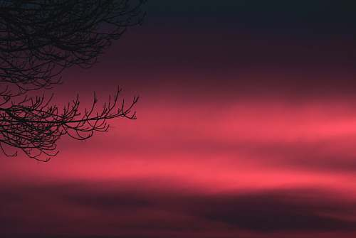 outdoors bare tree with red background sky