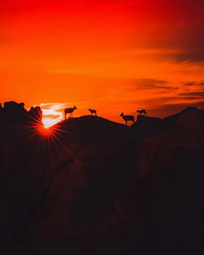 photo outdoors four animals standing on high ground during golden hour flare free for commercial use images