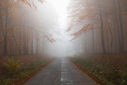 trees gray empty road between trees road