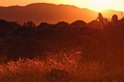 sunset photo of plants within mountain range during golden hour dusk