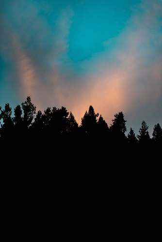 sky silhouette of trees under white clouds sunrise