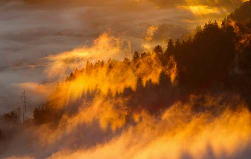 bled silhouette of trees with fog under orange sky sunrise