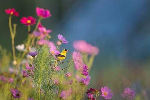 flower yellow and black bird on flower bird