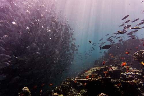 sea school of fish under water water