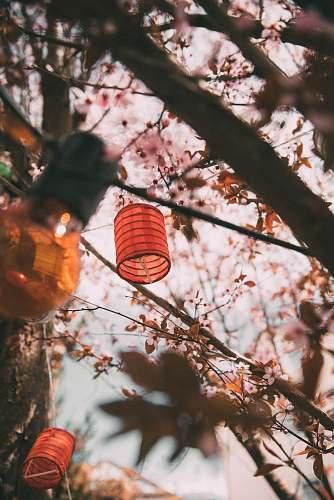human paper lanterns at trees person