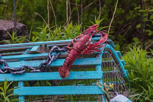 person red lobster on green cage near green grass human