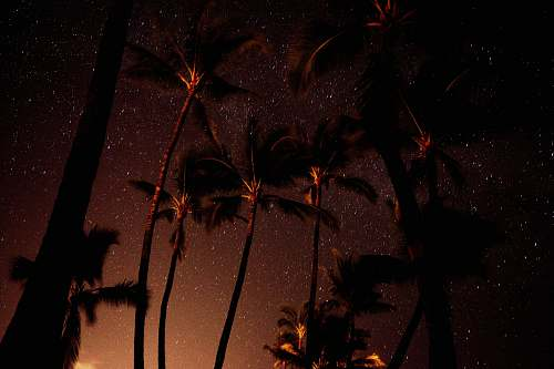 tree low angle photography of coconut tree glow