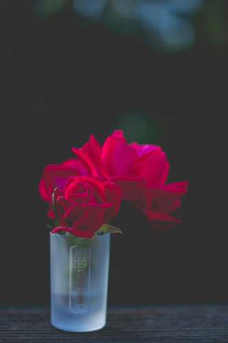 human red roses in frosted shot glass people