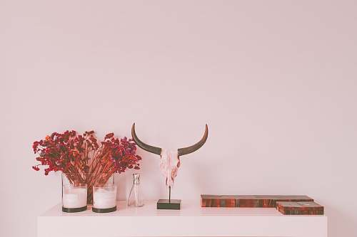 background animal skull table decor interior