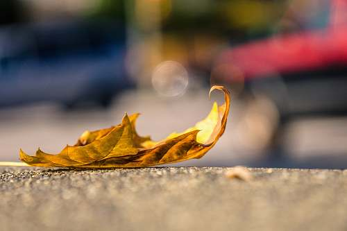 leaf brown leaf on concrete pavement fall