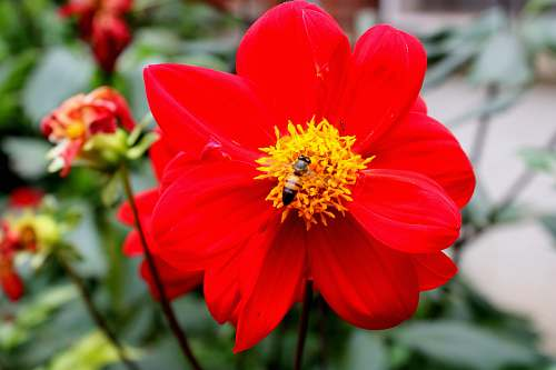 pollen close-up photo of red petaled flower animal