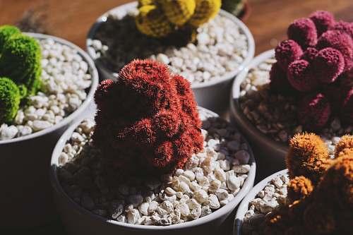 flora five assorted-color plants rocks