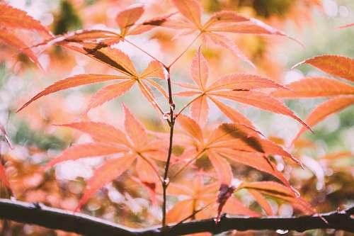 leaf green leafed plant foliage
