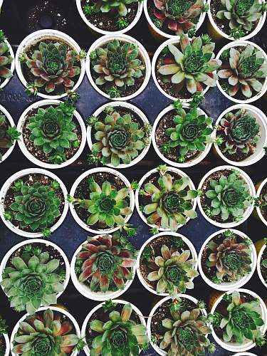 pot green succulent plant lot on white flowerpots succulent