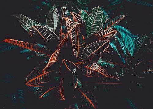 leaves macro photo of black plants night