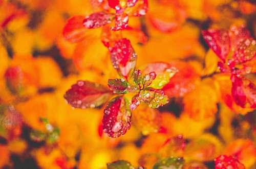 orange macro photography of red plant jyväskylä