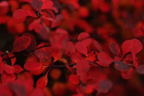 flower macro shot of red flowers petal