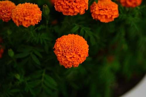 flower orange clustered flowers blossom