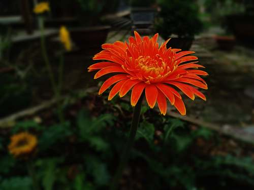 blossom orange flower flower
