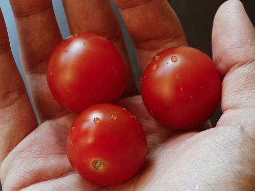 food person holding three red tomatoes tomato