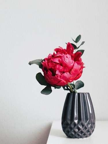 flower red petaled flower inside black vase ikebana