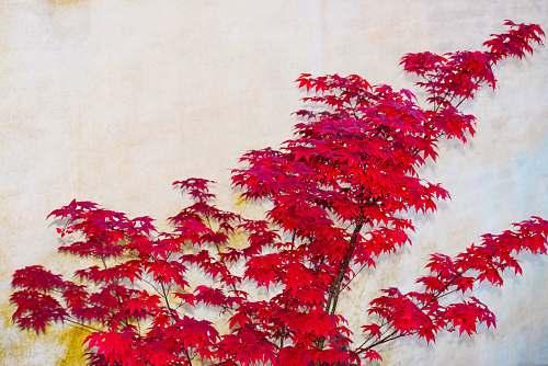 leaf red petaled flower painting tree