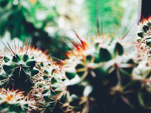 flora shallow focus photography of cactus plants cactus
