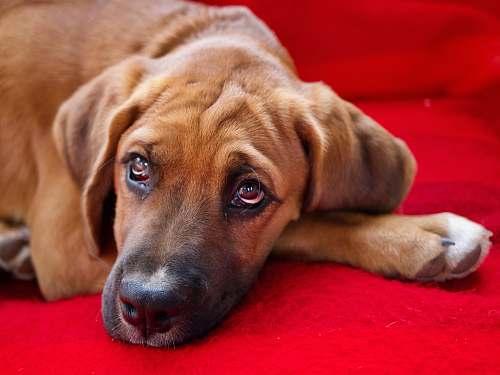 dog dog lying on red textile canine