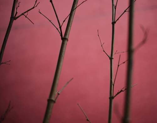 plant macro photography of bamboo sticks bamboo
