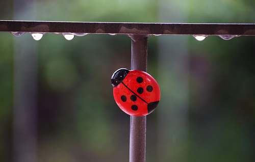 sphere red ladybug toy on metal rail funny