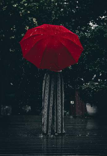 umbrella woman holding red umbrella standing near tree at daytime canopy