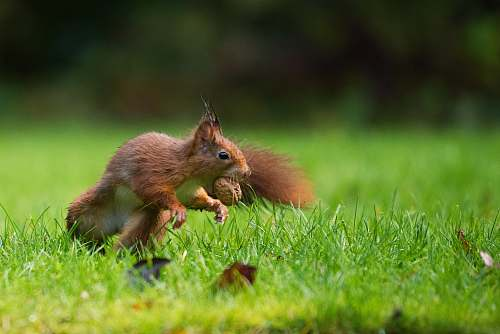 mammal selective focus photography of squirrel eating nut animal