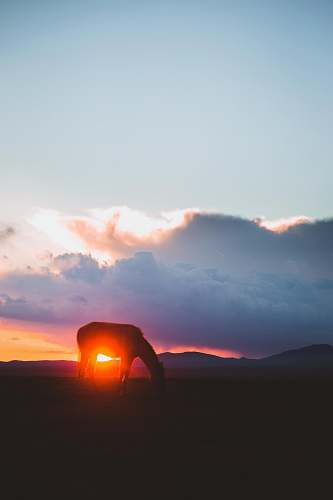 sunset silhouette of horse under sunset sky
