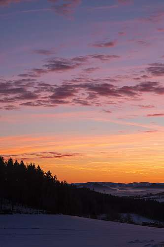 sunset silhouette of pine trees during golden hour austria