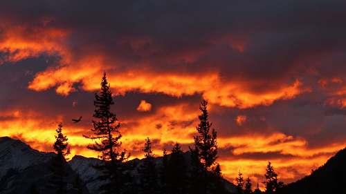 dusk silhouette of trees under orange sky dawn