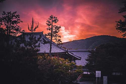 dusk gray roofed temple surrounded with trees sunrise